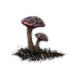 Spider Mushroom