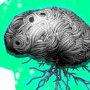 Mature Neural Stem