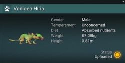 Vonioea Hiria - Male.jpg