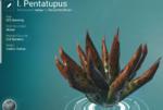 I. Pentatupus (Surface)