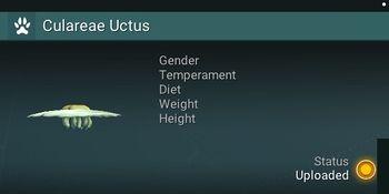 Culareae Uctus