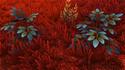 Lodret IV Terrestrial Flora 5.png