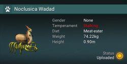 Noclusica Wadad - None.jpg