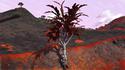 Lodret IV Terrestrial Flora 12.png