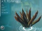 E. Groutginagica (Surface)