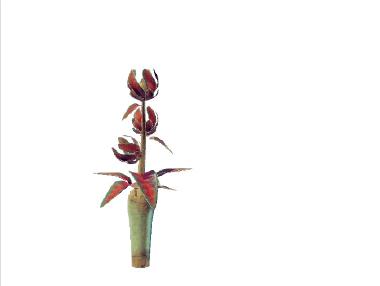 Plant huwerelica nubrerianium.png