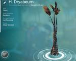 H. Dryabeum