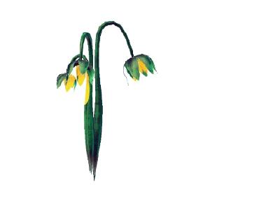 Plant jauondea coborusae.png
