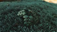 Naisha Plant.jpg