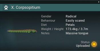 X. Corpsopitium