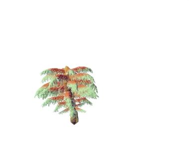 Plant osolus riscitasica.png