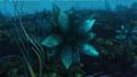 Lodret IV Aquatic Flora 5.png