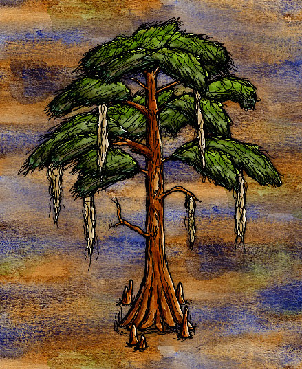 Bald Cypress Tree.jpg