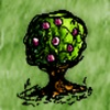 Domestic Gooseberry Bush.jpg