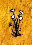 Seeding Wild Carrot.jpg