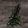 Wild Cabbage.jpg