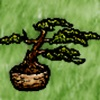 Dry Ancient Yew Bonsai