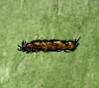Buried Grave.png