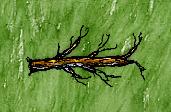 Straight Branch.jpg