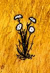 Wild Carrot(plant).jpg