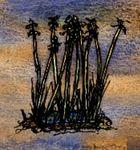 Tule Reeds.jpg