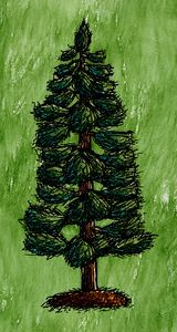 White Pine Tree with Needles