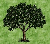 Languishing Domestic Mango Tree.jpg