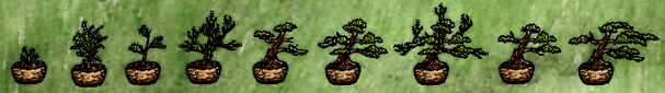 Bonsai Stages.png
