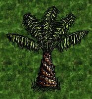 Empty Oil Palm