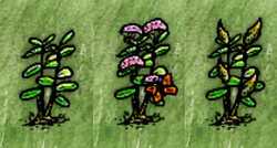 Milkweed Growth.png