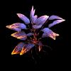 Lava Leaves