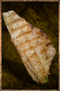 Grilled Salmon.png