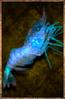 Azure Shrimp.png
