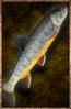 Raw Salmon.png