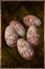 Larva Egg.png