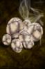 Roasted Krimp Nut.png