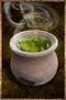 Needle Tea.png