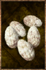 Cooked Larva Egg.png