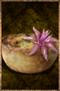 Cactus Pie.png