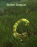 MOB Golden Scorpion TN.JPG