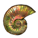 Ammonite Glyph inventory icon.png