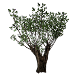 Verdant Tree inventory icon.png
