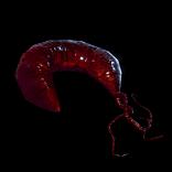 Vestigial Organs inventory icon.png