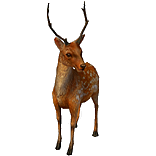 Formosan Deer Pet inventory icon.png