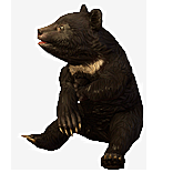 Formosan Bear Pet inventory icon.png