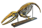Whale Skeleton Decoration inventory icon.png