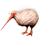 Albino Kiwi Pet inventory icon.png