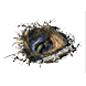 Seagull Nest inventory icon.png