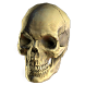 Bleached Skull Helmet inventory icon.png