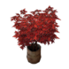 Maple Tree inventory icon.png